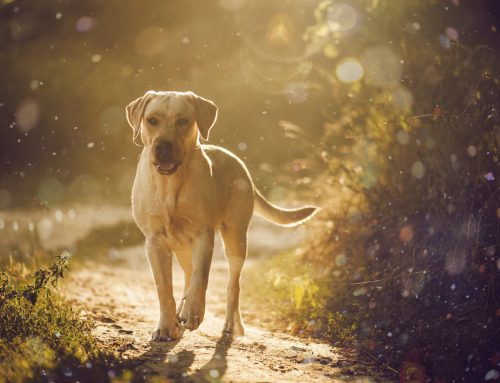10 Facts You Need to Know About Heartworm Disease to Protect Your Pet