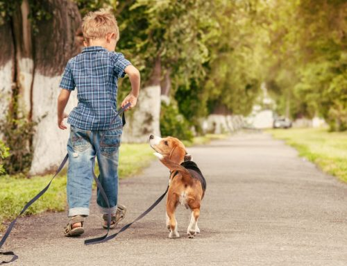Growing Up Best Friends: Safe Games for Pets and Kids