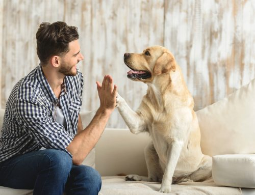 More than Just a Checkup: The Importance of Pet Wellness Visits