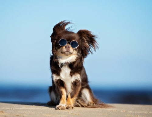 Summer Pet Hazards and How to Avoid Them