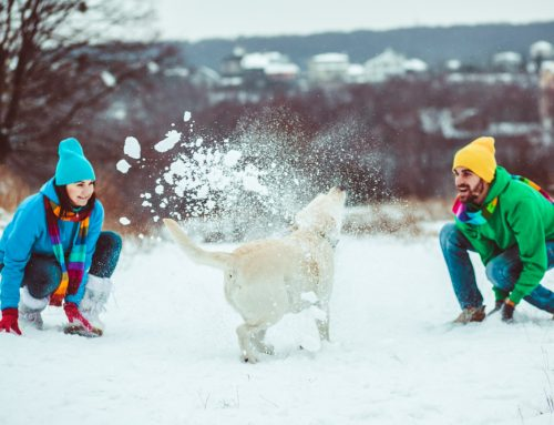 How to Enjoy Cold Weather Activities Safely with Your Pet