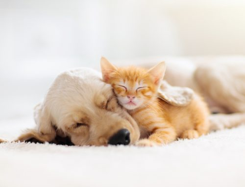 9 Benefits of Spaying or Neutering Your Pet